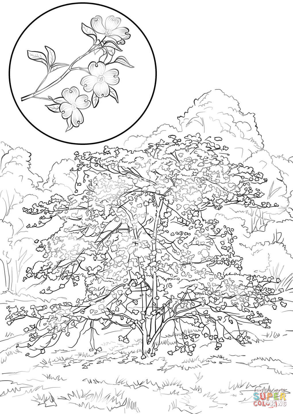 florida coloring pages - photo#30