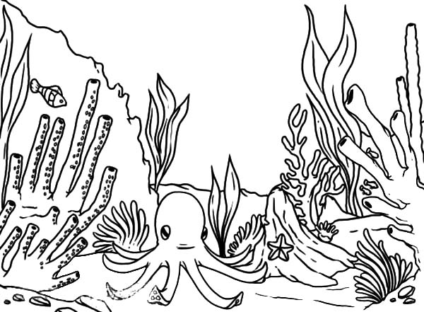 austrailan barrier reef coloring pages - photo#5