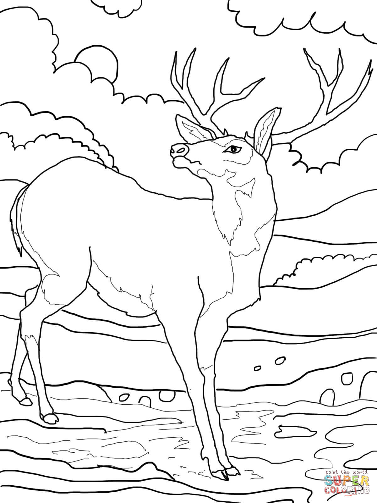 coloring pages mule deer rocky mountains and elk