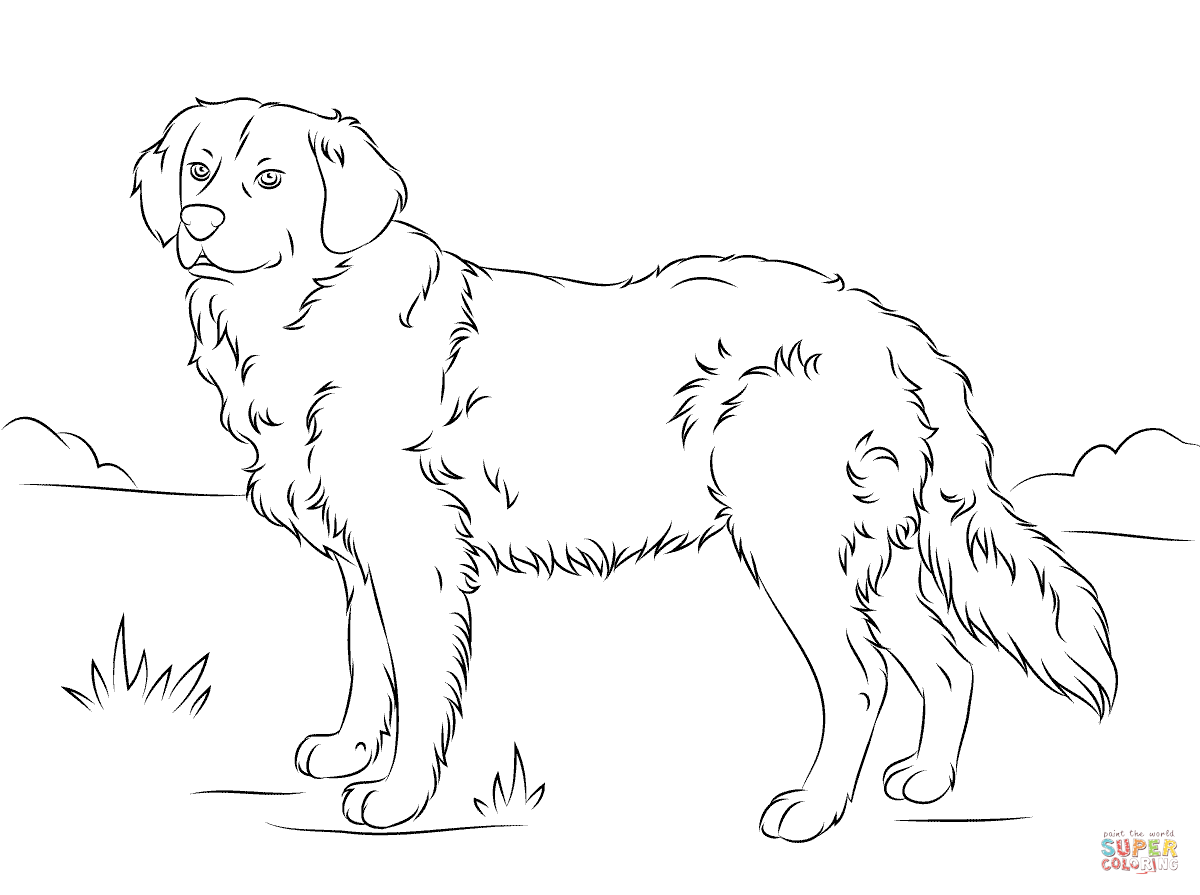 Golden Retriever Puppies Coloring Pages - Coloring Home