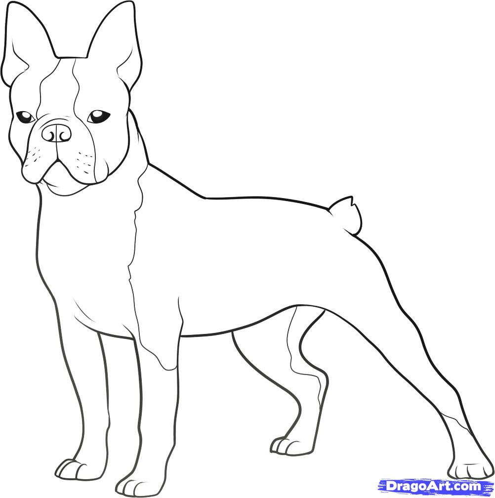 boston terrier coloring page - Boston Terrier Coloring Page