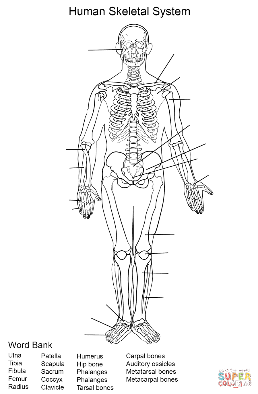 Human Skeletal System Worksheet Coloring Page   Free ...