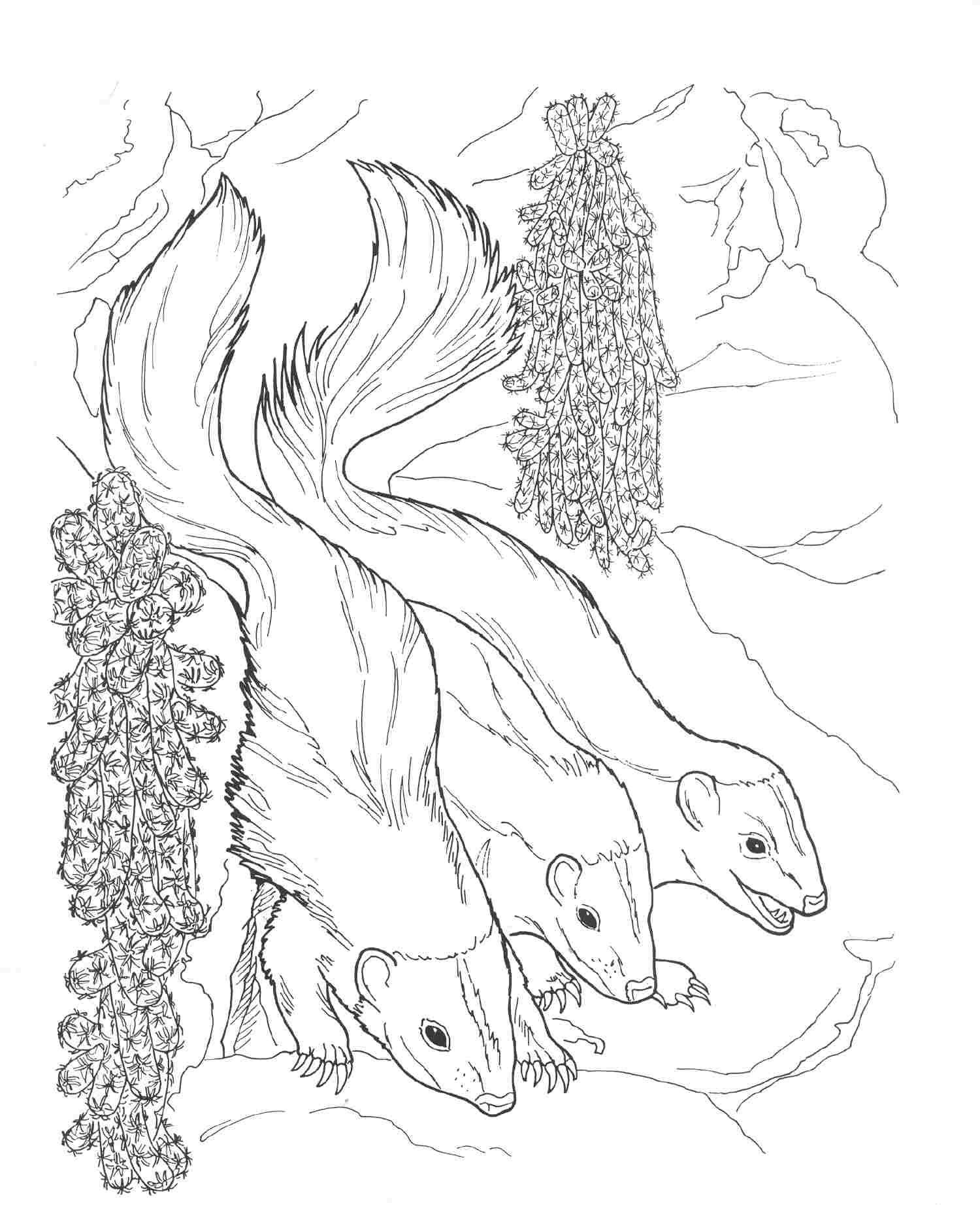 7 Pics Of Night Animals Coloring Pages