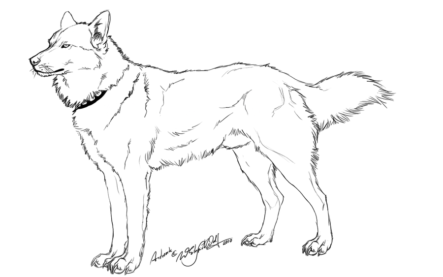 12 Pics of Realistic Husky Coloring Pages - Siberian Husky ...
