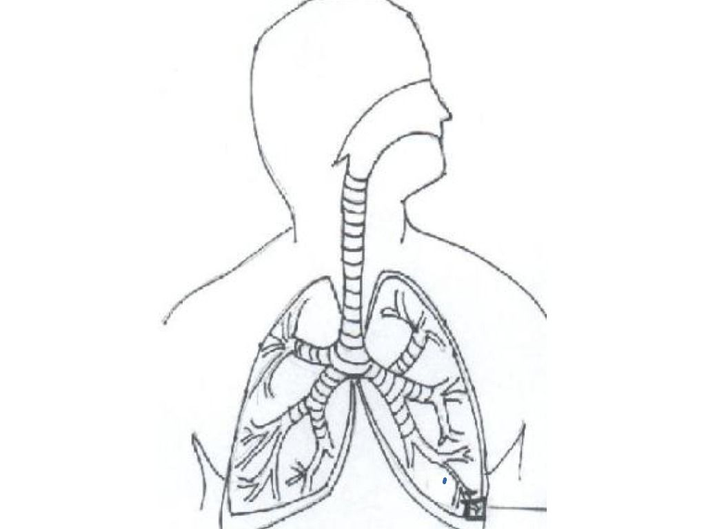anatomy coloring pages of respiratory - photo#24