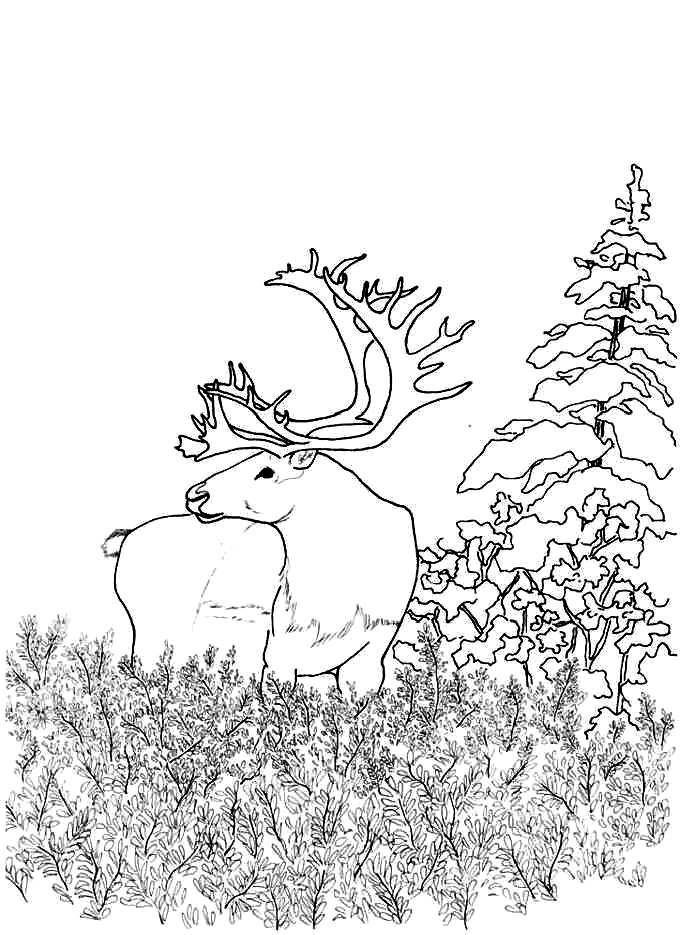 Woodland Animals Coloring Pages Coloring Home