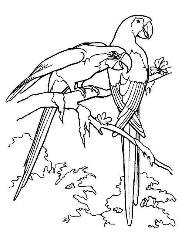 Paroots Coloring Pages Print Coloring Home
