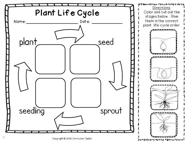 Free Printable Plant Life Cycle Worksheets | Search Results | Calendar ...