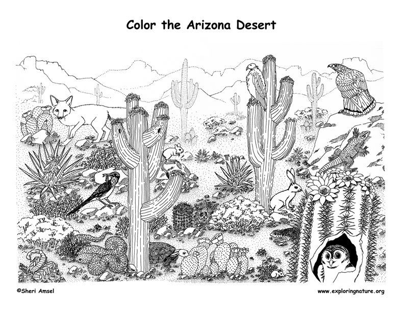 Coloring Page Of Dessert Animal - Coloring Pages For All Ages