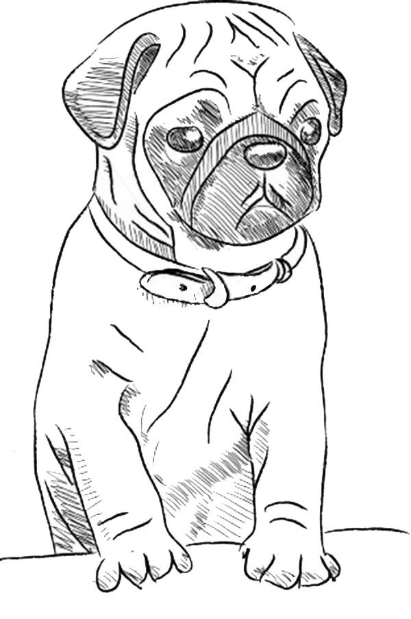 pug coloring pages - photo#7