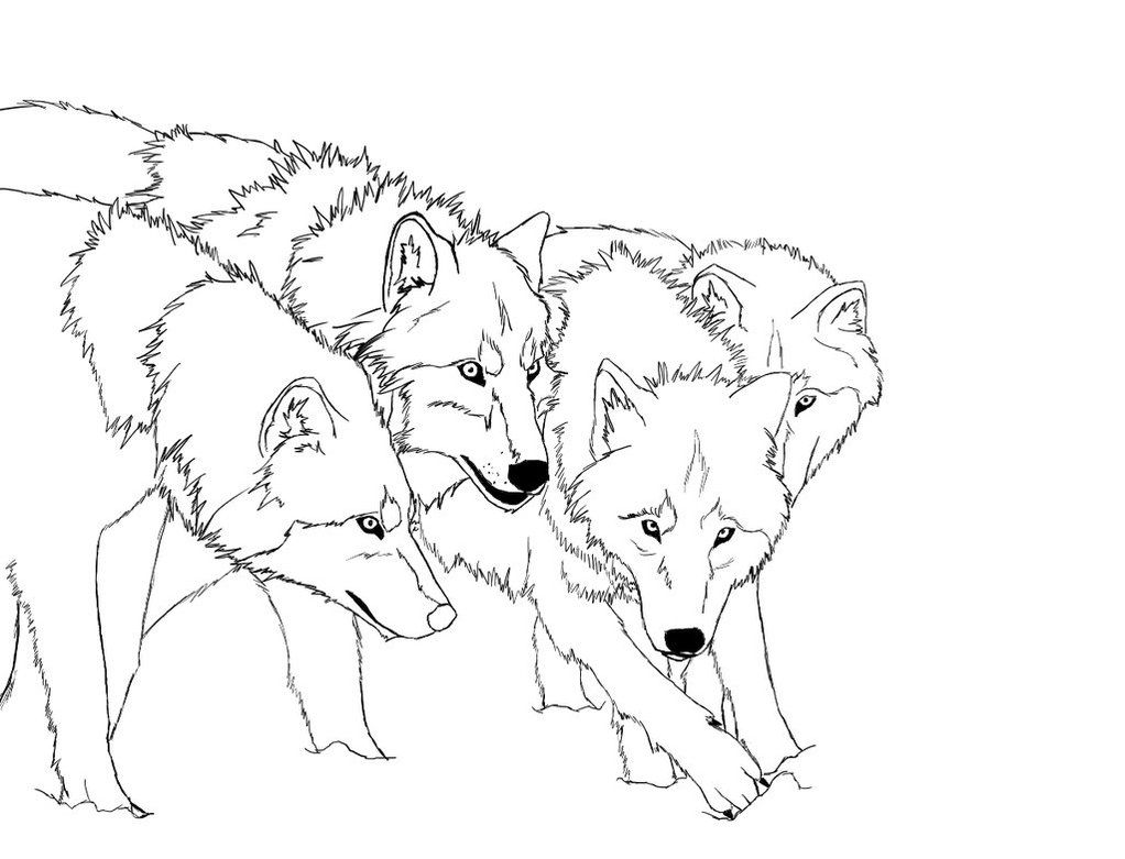 Baby Wolves Coloring Pages Coloring Home
