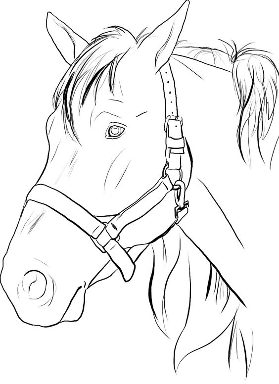 horse face coloring pages - photo#4
