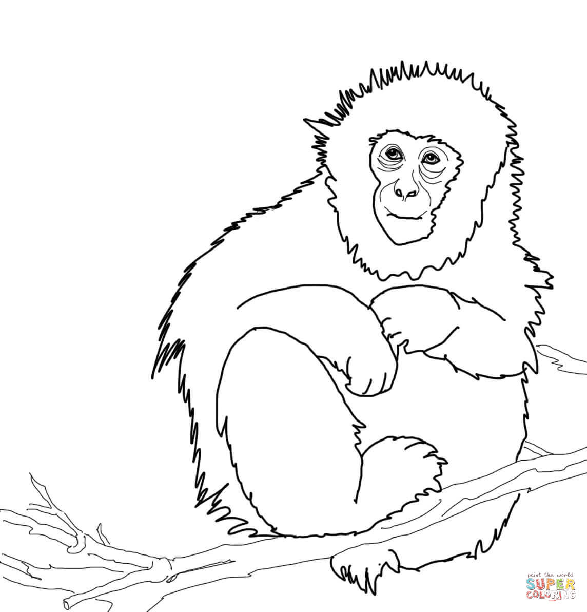 coloring pages realistic - realistic monkey coloring pages coloring home