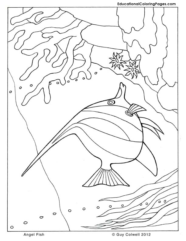 coloring pages ocean animals - photo #44
