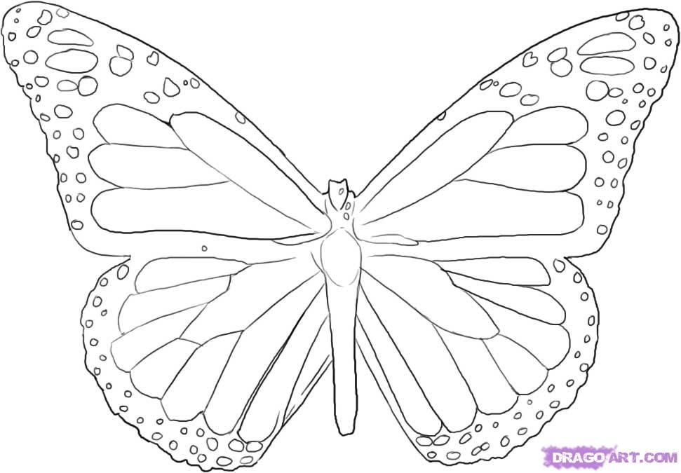How to Draw a Butterfly, Step by Step, Butterflies, Animals, FREE