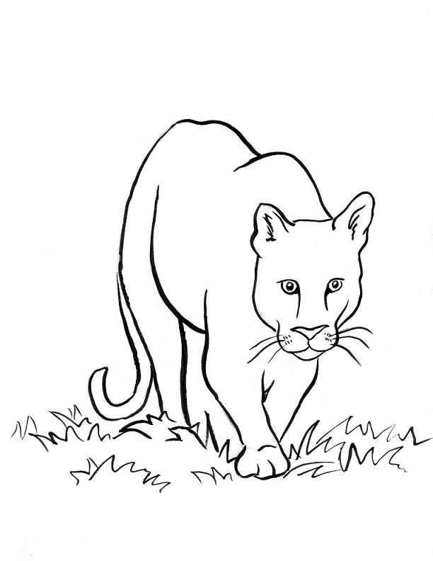 free coloring pages of mountain lions | Coloring Pages For Kids
