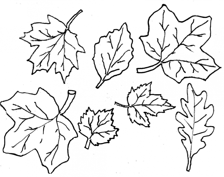 large coloring pages of leaves - photo#35
