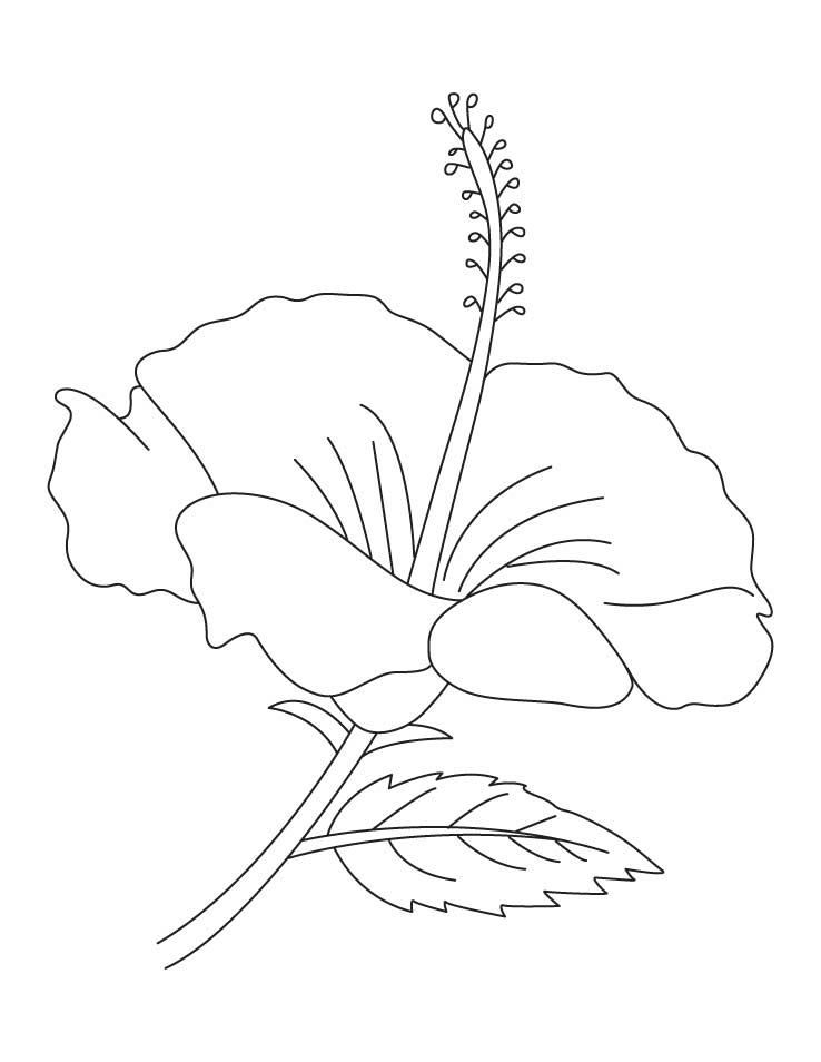 Hibiscus flower coloring pages | Download Free Hibiscus flower
