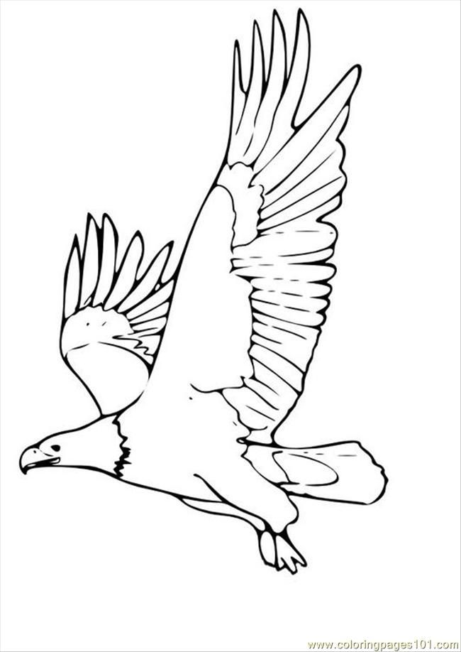 Coloring Pages Tures Pages Photo Eagle P (Birds > Eagle) - free