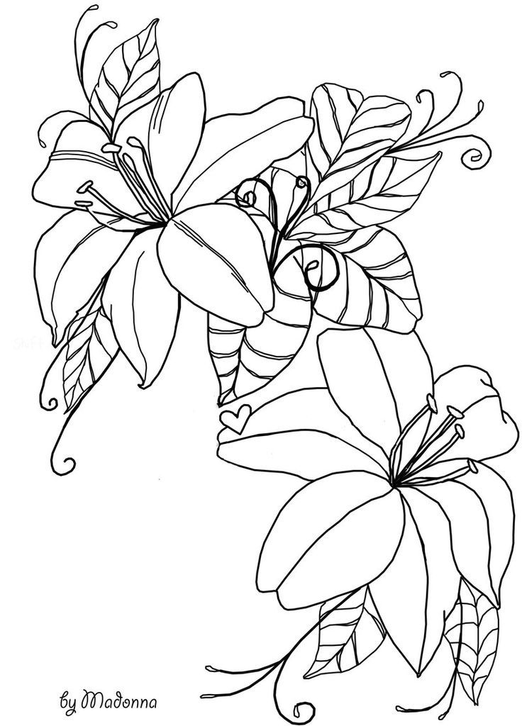Line Art Flowers Husqvarna : Outlines of flowers coloring home