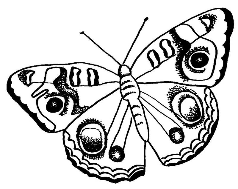 big-dotted-pattern-butterfly-coloring-pages: big-dotted-pattern