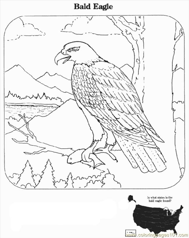 Bald Eagle Coloring Page | Free Coloring Pages - Coloring Home