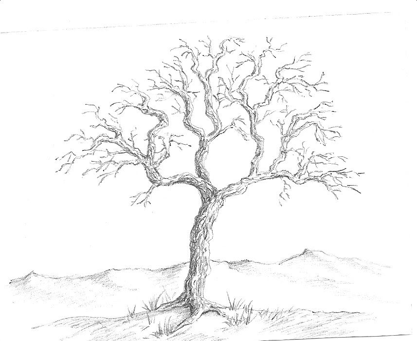 how to draw trees on a map