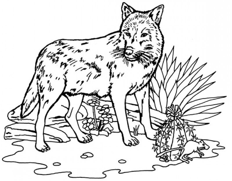 Wolf Coloring Pages Pdf : Wolf dog coloring pages kids colouring home
