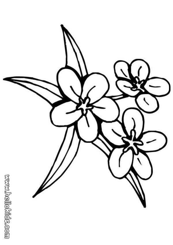 pretty flowers coloring pages - photo#35