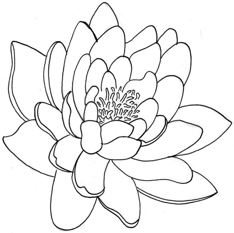 Line Drawing Name Designs : Outline of flowers coloring home