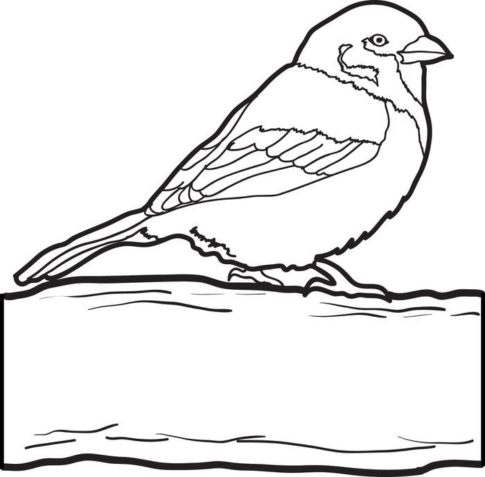 Sparrow coloring pages - photo#39