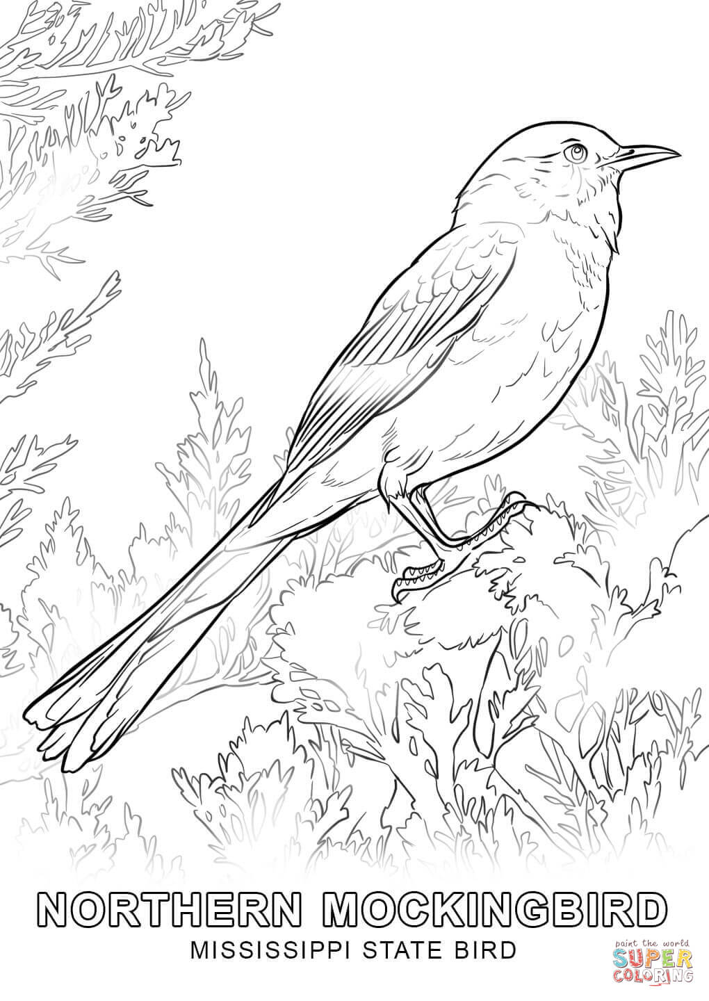 Mississippi State Bird Coloring Page Free Printable