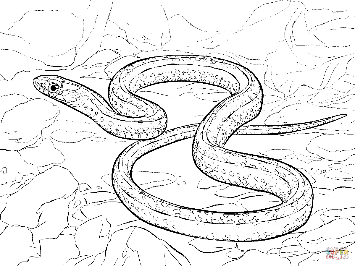 Plains Garter Snake Coloring Page