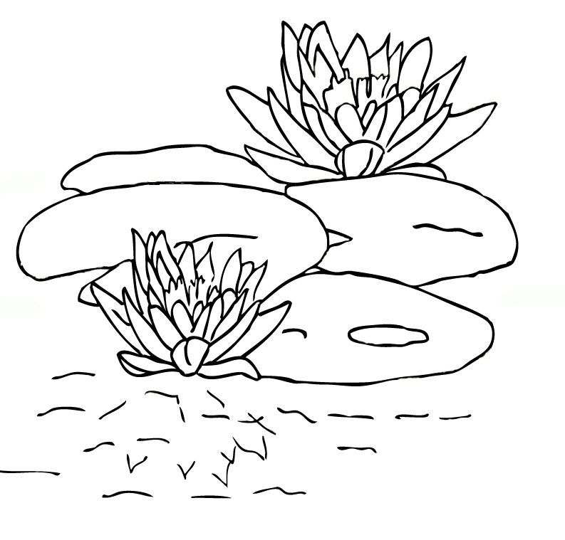 Free Printable Lily Pad Coloring Pages For Kids