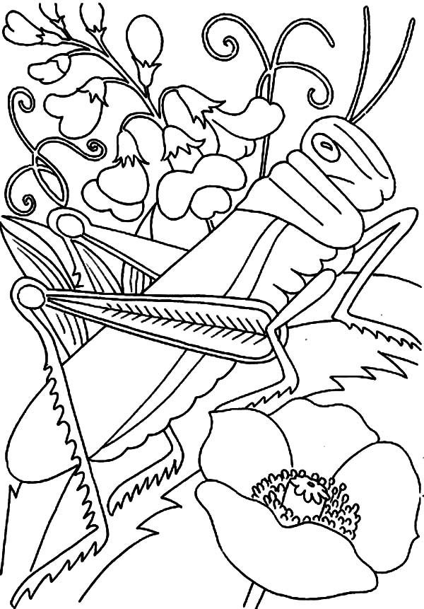 Grasshopper on the Flower Coloring Page - Download & Print Online ...
