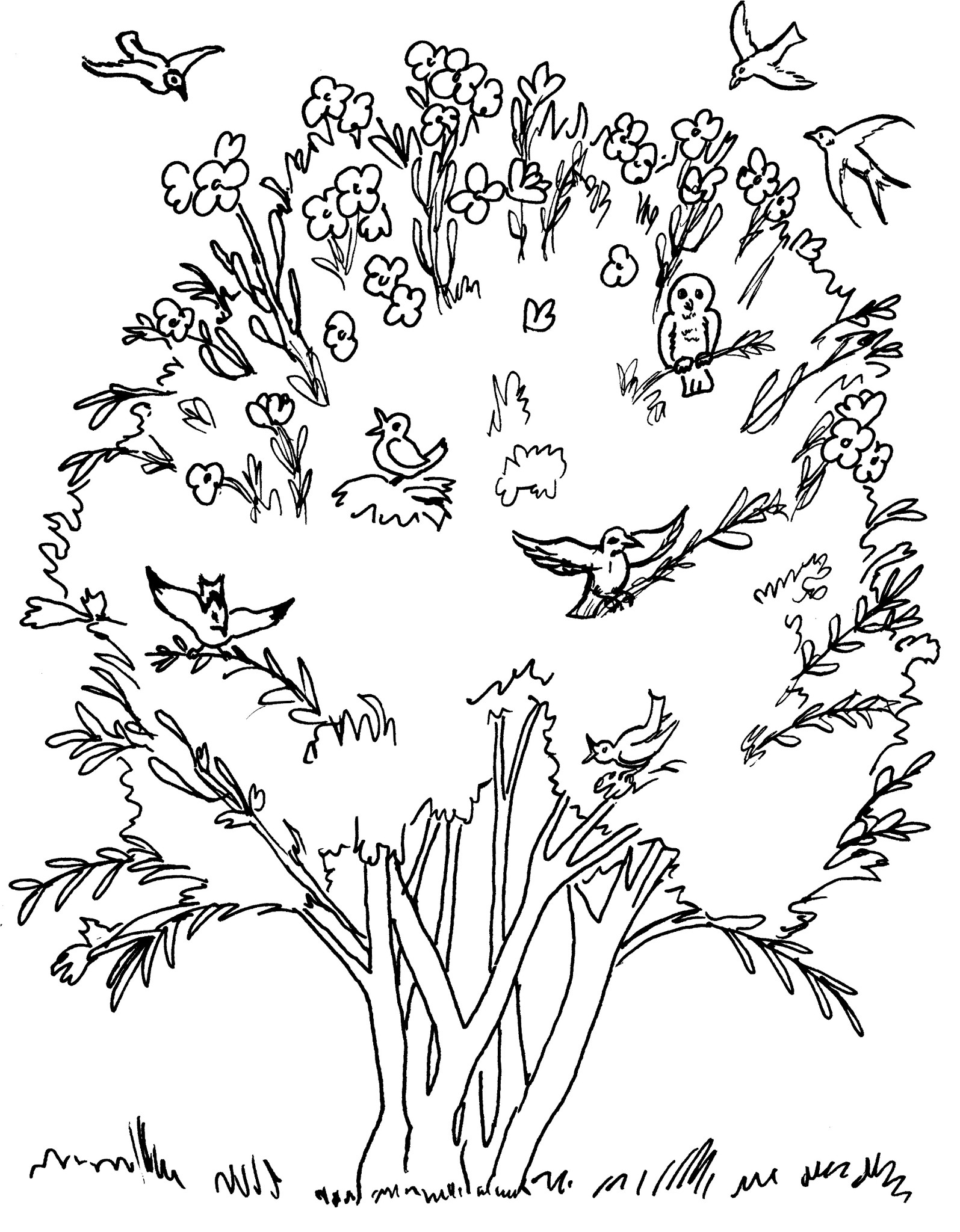 Seed coloring pages