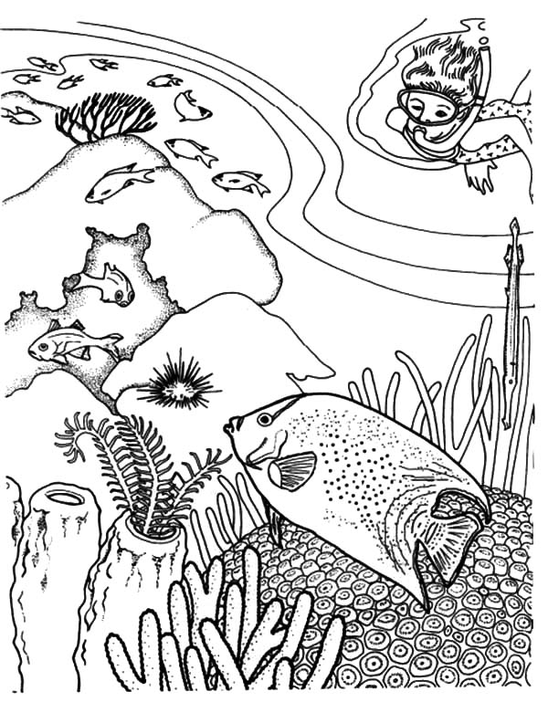 diving enjoy viewing coral reef fish coloring pages coral reef fish ecosystem coloring page - Coral Reef Coloring Pages Kids