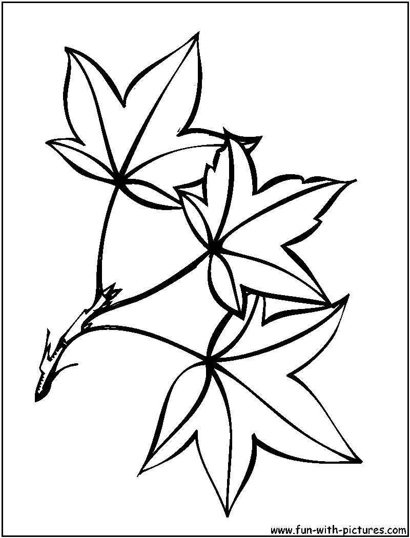Leaf Coloring Pages Pdf : Leaf coloring pages free template