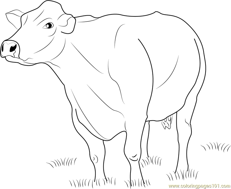 Dairy Cow Coloring Sheets