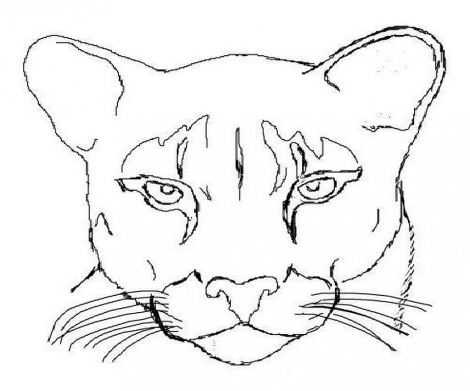 Mountain Lion Coloring Page Coloring