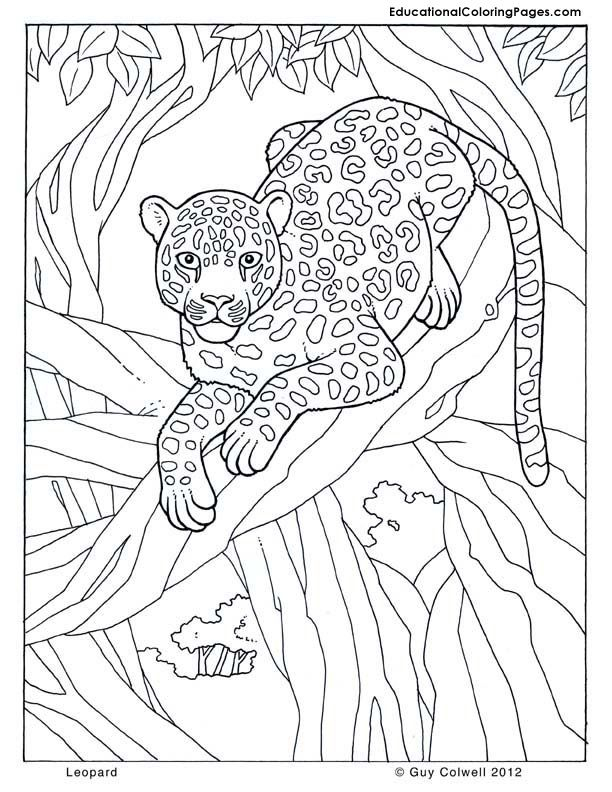 Leopard Coloring Pages Pdf : Leopard jungle colouring pages page coloring home