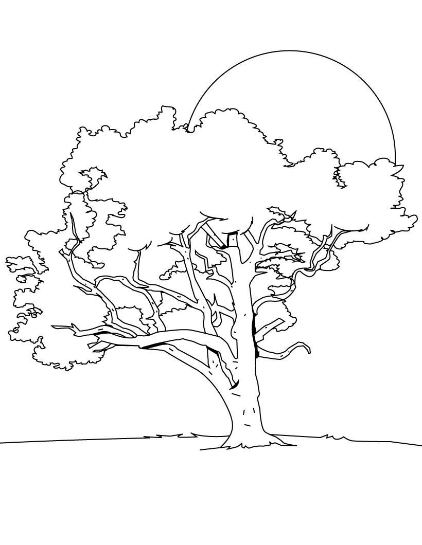 Tree Coloring Pages | Coloring Pages To Print