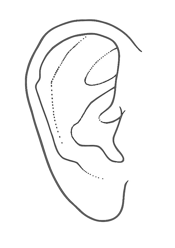 Pair Of Ear Coloring Pages Pair Of Ear Coloring Pages Kids