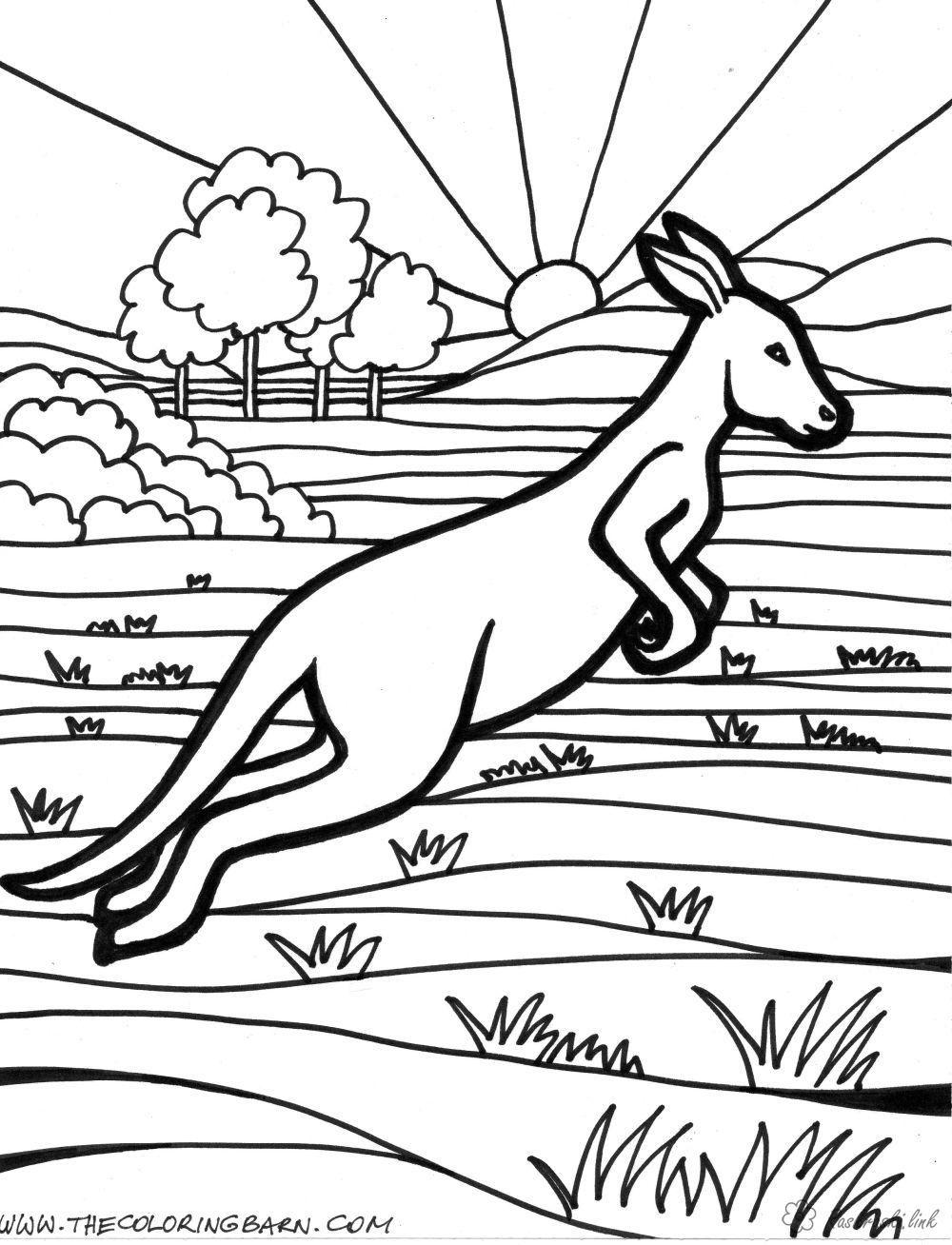 Раскраска австралии