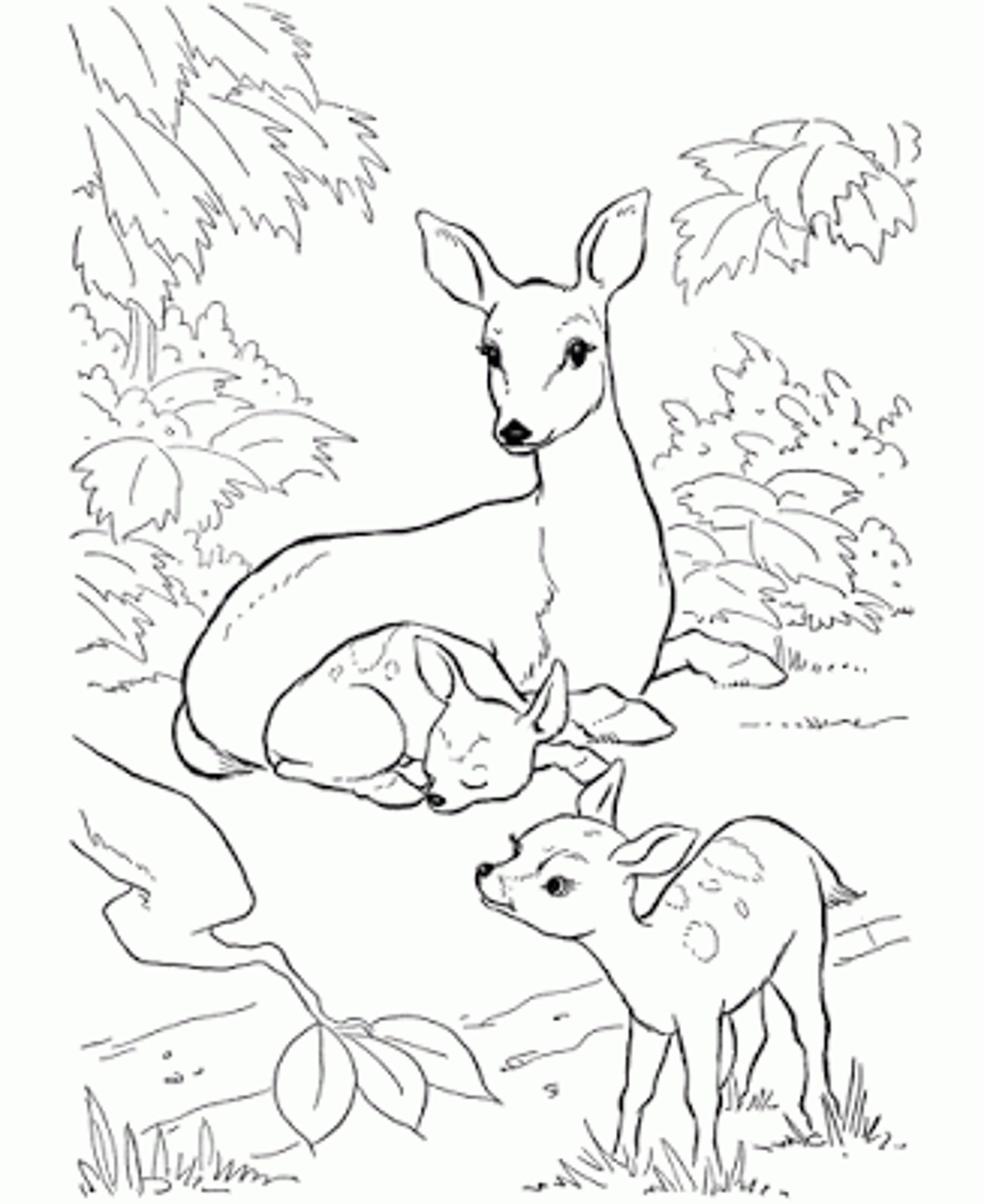Drawing pages of deer - Baby Deer Coloring Pages Printable Kids Colouring Pages