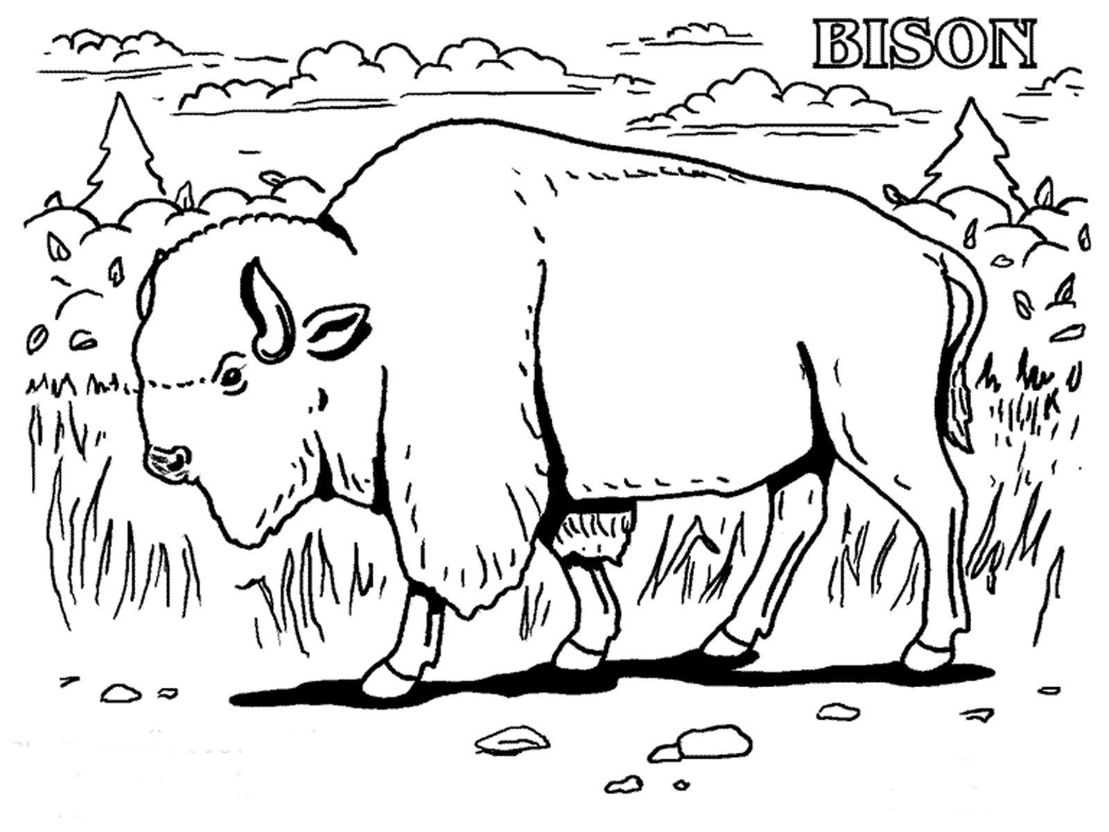 Gallery of grassland animals coloring page