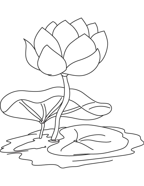 lily pads coloring pages - photo#11