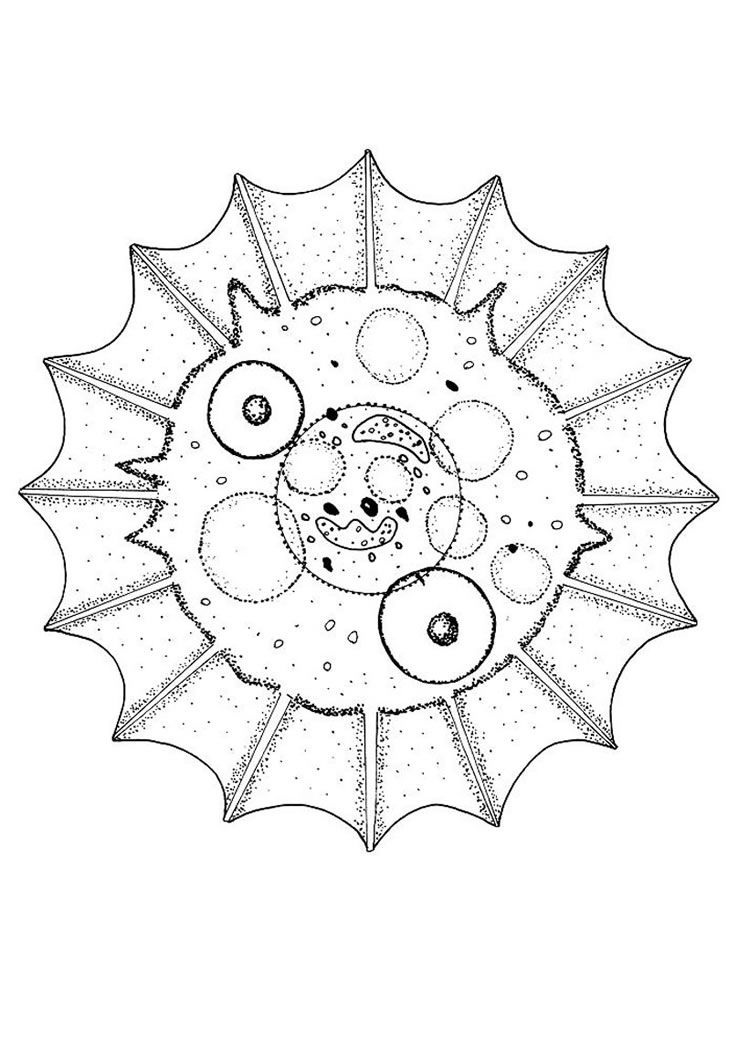 Animal mandalas coloring pages coloring home for Animal mandala coloring pages printable