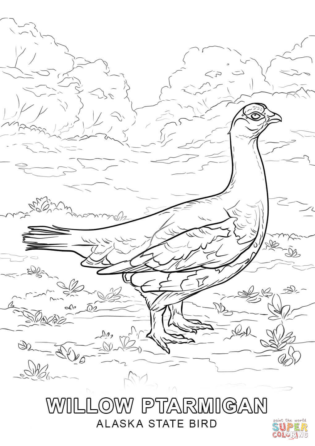alaska state bird coloring page free printable coloring pages