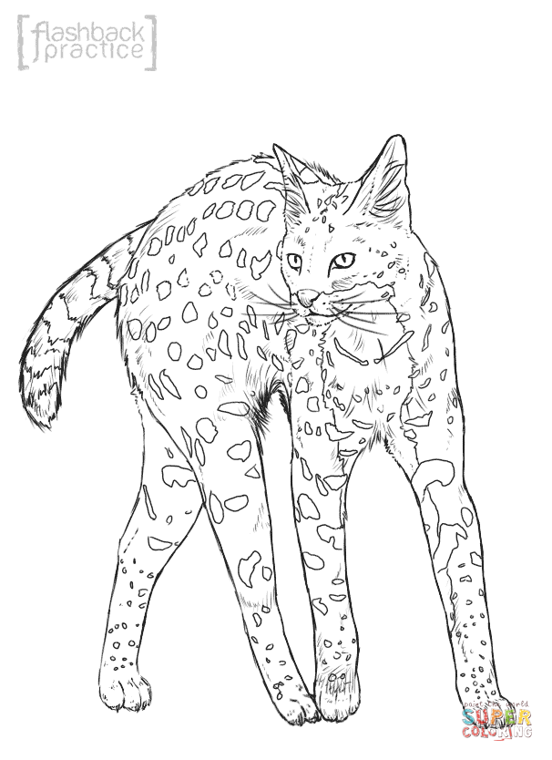 wild cats coloring pages print - photo#7